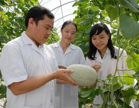 An Giang:Sản xuất nông nghiệp theo hướng hiện đại, bền vững