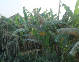 """Nam Định: Dân """"gồng"""" mình gánh bụi từ khu công nghiệp của tỉnh bạn"""