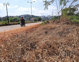Dân kinh hãi trước cảnh dọn dẹp đường bằng... thuốc diệt cỏ