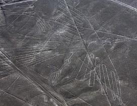 Sinh vật bí ẩn trong hình vẽ khổng lồ cổ đại mới được tìm thấy ở Peru