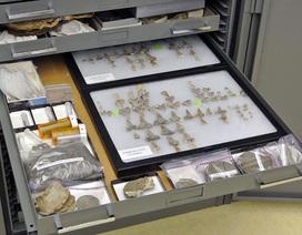 Phát hiện hoá thạch loài cá mập khổng lồ 91 triệu năm tuổi chưa từng được biết đến