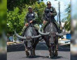 Cảnh sát cưỡi... trâu nước nặng 450 kg đi tuần tra
