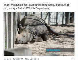 Tê giác Sumatra của Malaysia đã chính thức tuyệt chủng