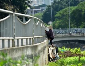 Vườn rau xanh mượt bỗng xuất hiện bên con đường đi bộ dài nhất Thủ đô