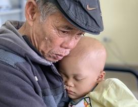 Ông nội bán lúa non đưa cháu đi chữa ung thư: Chuyên gia Pháp sang Việt Nam hội chẩn