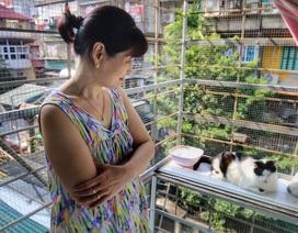 """Hành trình 20 năm cứu sống hàng trăm chú mèo bị bỏ rơi của người mẹ """"đơn thân"""" Hà Nội"""