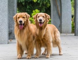 Khó tin: Được trả lương gần 1 tỷ đồng/năm chỉ để… trông nhà và chăm sóc cún cưng
