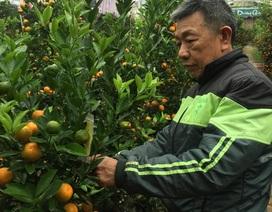Nhiều làng hoa ở Hà Nội sẵn sàng cho vụ Tết Nguyên đán