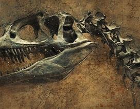 Phát hiện ra loài khủng long mới ở Trung Quốc