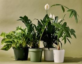 """5 loại cây phong thủy trong nhà vừa """"hút"""" tài lộc, vừa mang đến lợi ích bất ngờ cho sức khỏe"""