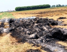 Vụ phóng hỏa đốt cả cánh đồng, chỉ nhận án treo: Bản án bị kháng nghị