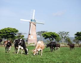 """Sữa tươi organic của Vinamilk dành được cảm tình của người dân """"đảo quốc sư tử"""""""