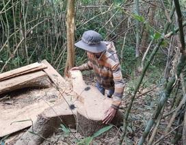 Một vụ phá rừng, công an và kiểm lâm báo cáo khác nhau