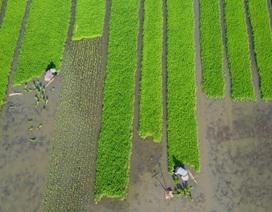 Châu Á cần 800 tỷ USD để đối phó với cuộc khủng hoảng lương thực