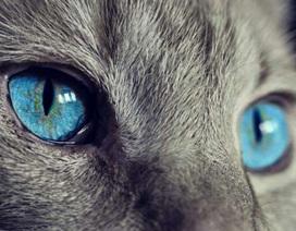 """Công nghệ mới cho phép con người """"nhìn"""" thế giới qua đôi mắt động vật"""