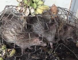 Được giải cứu khỏi xe buôn, số động vật hoang dã lại nằm chờ chết trong... kho hải quan