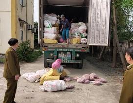 Xe container chở hơn 10 tấn nội tạng bốc mùi hôi thối