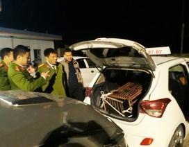 Bỏ cá thể gấu nặng 100kg sau cốp taxi mang đi tiêu thụ