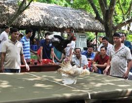 Đồng Tháp: Hội quán - nơi gắn kết nông dân phát triển xóm làng