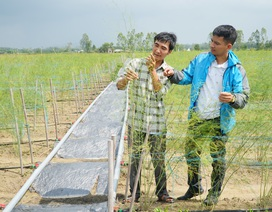 Quảng Ngãi: Rời việc Nhà nước, chàng trai 32 tuổi khởi nghiệp từ măng tây và nuôi thỏ