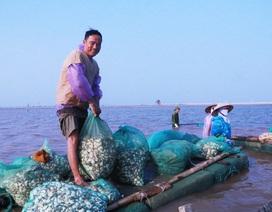 """Dân bức xúc vì chính quyền quản lý """"lỏng lẻo"""" đất đai bãi bồi ven biển Kim Sơn"""
