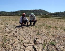 Phú Yên chi hơn 120 tỷ đồng hỗ trợ người dân khắc phục hậu quả hạn hán