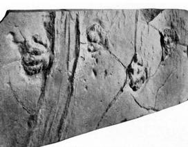 Hé lộ thêm phần bí ẩn về những viên đá tự di chuyển ở Thung lũng chết