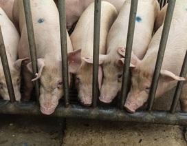 Tỷ phú giàu nhanh nhất thế giới nhờ... nuôi lợn
