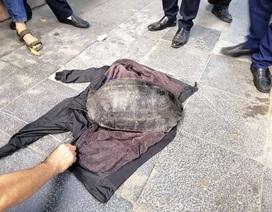 Người đàn ông câu trộm con rùa nặng hơn 10kg ở Hồ Gươm