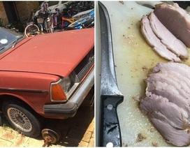 """Nắng nóng khắc nghiệt ở Australia, ô tô biến thành """"lò nướng"""" thịt lợn"""