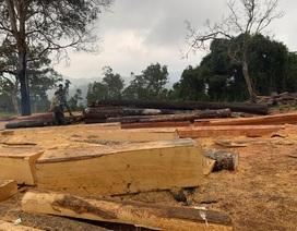 Rừng giáp ranh Đắk Lắk - Khánh Hòa bị tàn phá