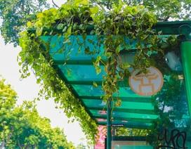 """Người Hà Nội thích thú với những """"khu vườn treo"""" ấn tượng trên nóc trạm chờ xe buýt"""