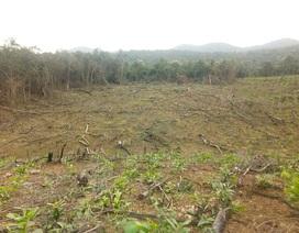 Vụ dân và người nhà cán bộ ồ ạt chặt phá rừng tự nhiên ở Quảng Bình: Sẽ xử lý nghiêm!