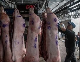 """Trung Quốc lao đao vì """"cơn bão"""" dịch tả lợn"""