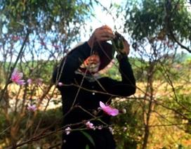 """Người trồng đào tuốt lá, tỉa cành … thấp thỏm """"ngóng"""" thời tiết"""