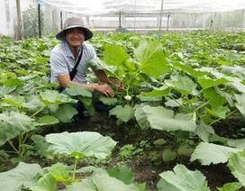 """Bỏ việc ngân hàng lương cao về trồng rau """"5 không"""" lãi 100 triệu/tháng"""