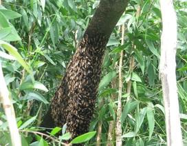 Gác kèo ong và Muối ba khía ở Cà Mau vào di sản văn hóa phi vật thể quốc gia