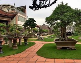 Khu vườn rộng 2000 m2 đẹp như tranh, sở hữu nhiều cây bạc tỷ ở Hà Nội