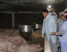 Bộ trưởng Nông nghiệp: Thực phẩm cho dịp Tết rất dồi dào