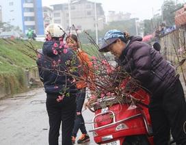 Dân Hà Nội chơi đào sớm, chi nửa triệu đồng cho 1 cành