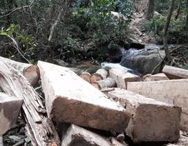 Chỉ đạo xử lý nghiêm vụ lâm tặc lập công trường để phá rừng tại Kon Tum!