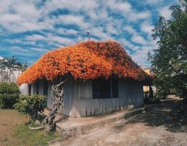 Đã mắt với những ngôi nhà phủ đầy hoa, ngỡ chỉ có trong cổ tích ở Việt Nam