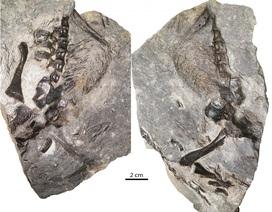 Hóa thạch thằn lằn 300 triệu năm tuổi được tìm thấy ở Canada