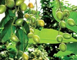 Phát hiện 5 loại cây nhiệt đới có tác dụng phòng chống ung thư hiệu quả