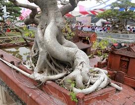 Mô hình mái đình cây đa giống thật đến ngỡ ngàng giá nửa tỷ đồng