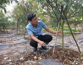 Ninh Bình: Trồng hoa hồng cổ bán Tết, 9X bỏ túi trăm triệu đồng