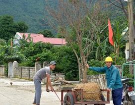 Hơn 2.000 gốc mai đi du Xuân, làng trồng mai dưới chân Đèo Ngang có nguồn thu hàng tỷ đồng