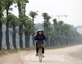 Hàng hoa sữa chuyển từ Hà Nội lên bãi rác Nam Sơn giờ ra sao?
