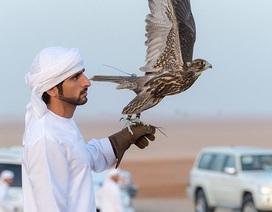 4 điều đặc biệt thú vị về cuộc sống của Thái tử Dubai
