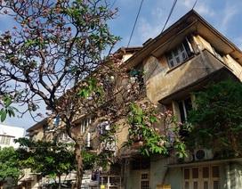 Đẹp nao lòng khu cư xá trầm mặc giữa lòng Sài Gòn tấp nập